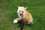 Photos/Images de La vie animale