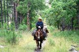 Balades à cheval dans le parc