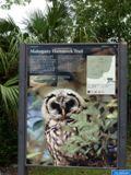 Sur Mahogany Hammock Trail