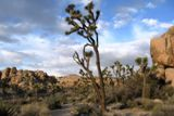 Joshua Tree NP
