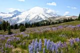 Photos/Images de Mount Rainier National Park