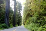 Photos/Images de Redwood National and State Parks