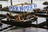 Otaries au Pier 39