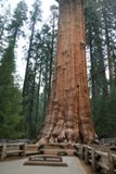 General Sherman Tree