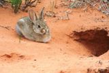 Lapin (Arches NP)
