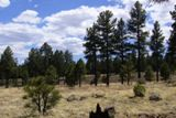 Sunset Crater Volcano NM