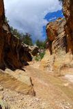 Willis Creek, début du trail