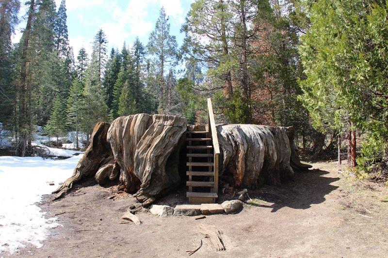 Mark Twain Stump